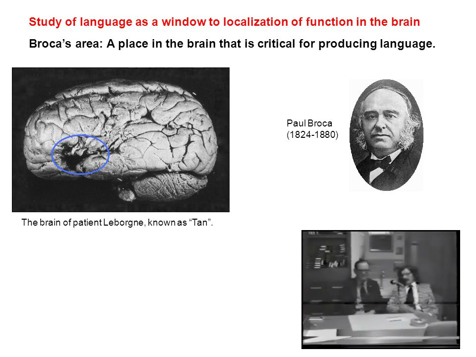 Study of language as a window to localization of function in the brain Broca's area: A place in the brain that is critical for producing language.