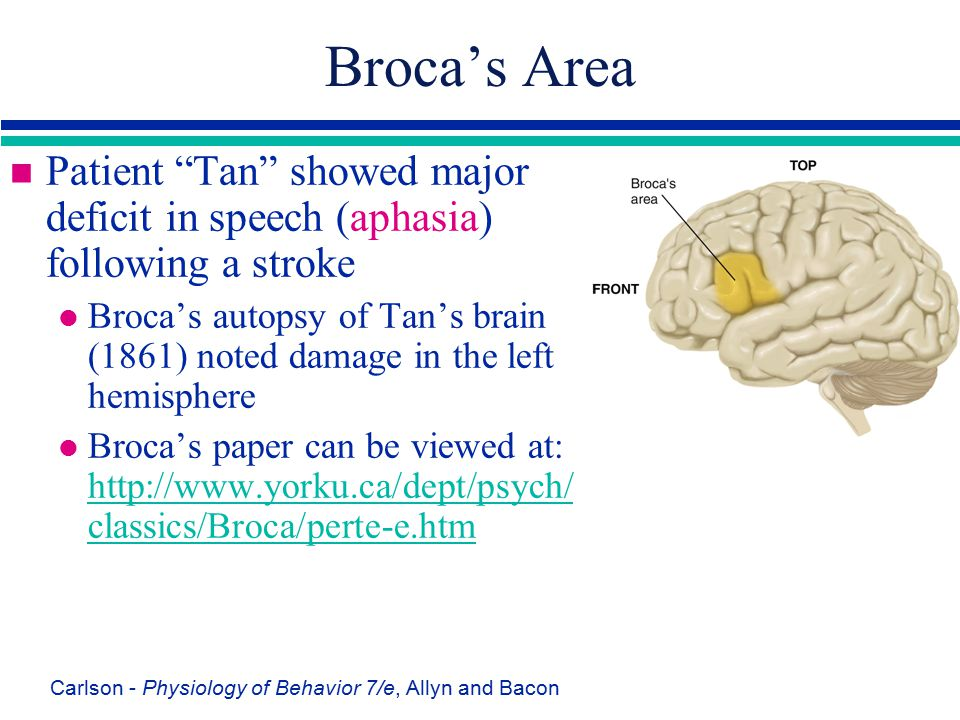 """Carlson - Physiology of Behavior 7/e, Allyn and Bacon Broca's Area n Patient """"Tan"""" showed major deficit in speech (aphasia) following a stroke l Broca"""