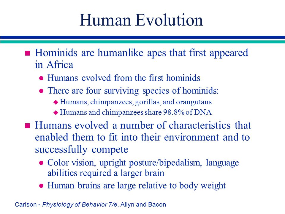 Carlson - Physiology of Behavior 7/e, Allyn and Bacon Human Evolution n Hominids are humanlike apes that first appeared in Africa l Humans evolved fro