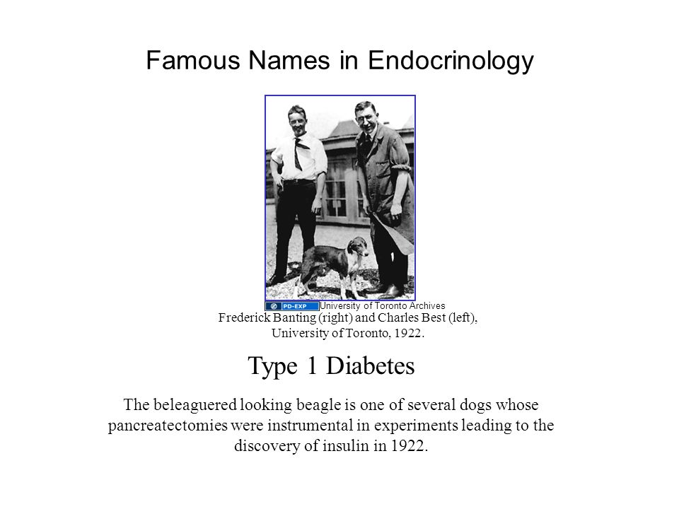 Famous Names in Endocrinology The beleaguered looking beagle is one of several dogs whose pancreatectomies were instrumental in experiments leading to the discovery of insulin in 1922.