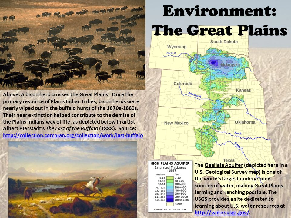 Above: A bison herd crosses the Great Plains. Once the primary resource of Plains Indian tribes, bison herds were nearly wiped out in the buffalo hunt