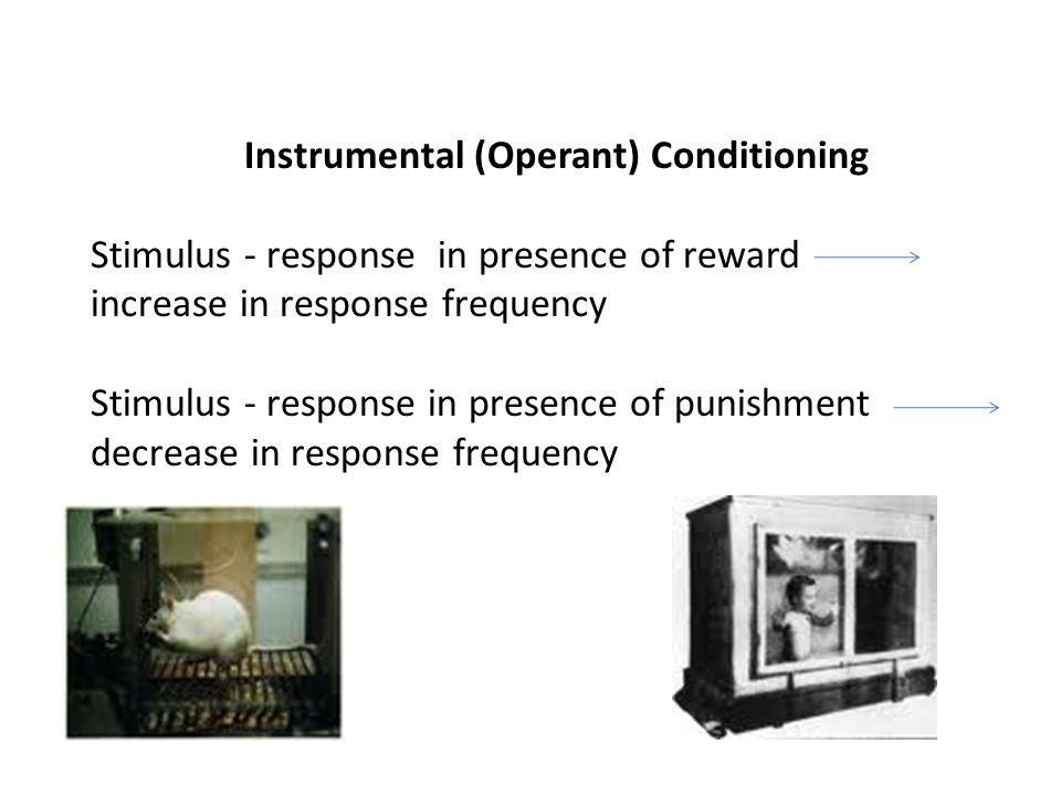 Instrumental (Operant) Conditioning Stimulus - response in presence of reward increase in response frequency Stimulus - response in presence of punishment decrease in response frequency