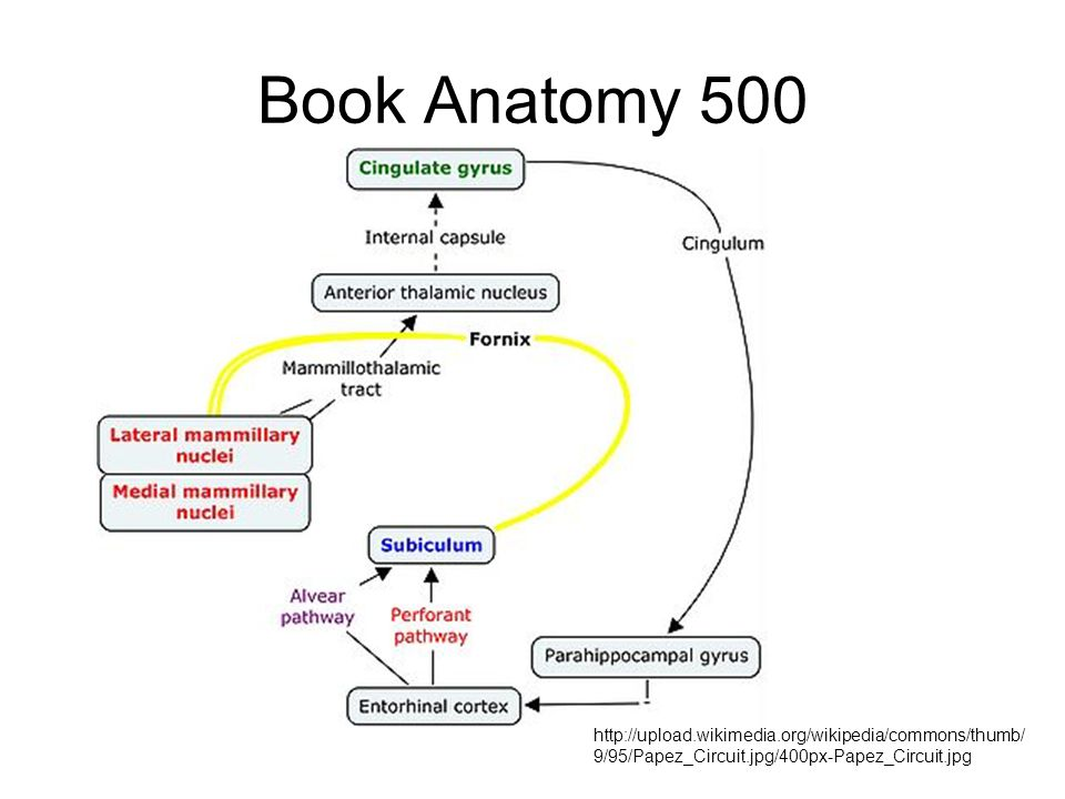 Book Anatomy 500 http://upload.wikimedia.org/wikipedia/commons/thumb/ 9/95/Papez_Circuit.jpg/400px-Papez_Circuit.jpg