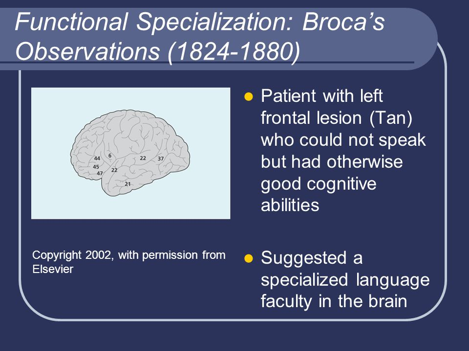 Functional Specialization: Broca's Observations (1824-1880) Patient with left frontal lesion (Tan) who could not speak but had otherwise good cognitiv