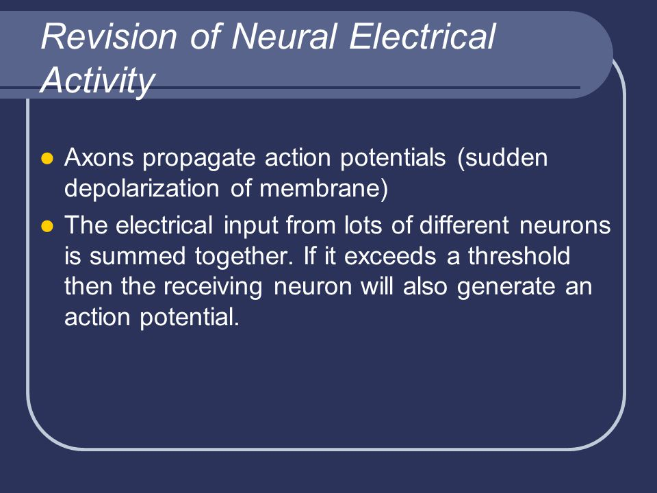 Revision of Neural Electrical Activity Axons propagate action potentials (sudden depolarization of membrane) The electrical input from lots of different neurons is summed together.
