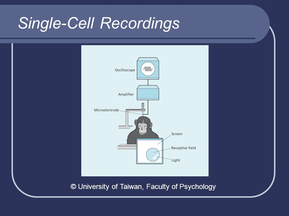 Single-Cell Recordings © University of Taiwan, Faculty of Psychology