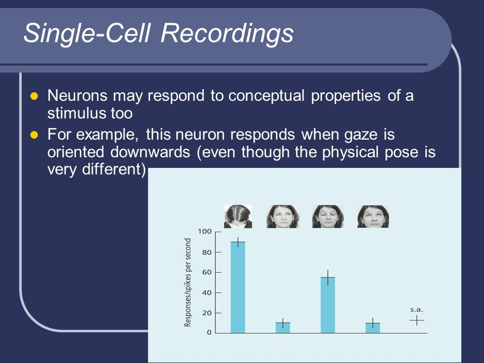 Single-Cell Recordings Neurons may respond to conceptual properties of a stimulus too For example, this neuron responds when gaze is oriented downwards (even though the physical pose is very different)