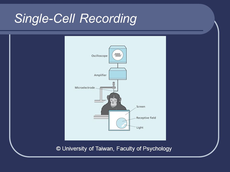 Single-Cell Recording © University of Taiwan, Faculty of Psychology