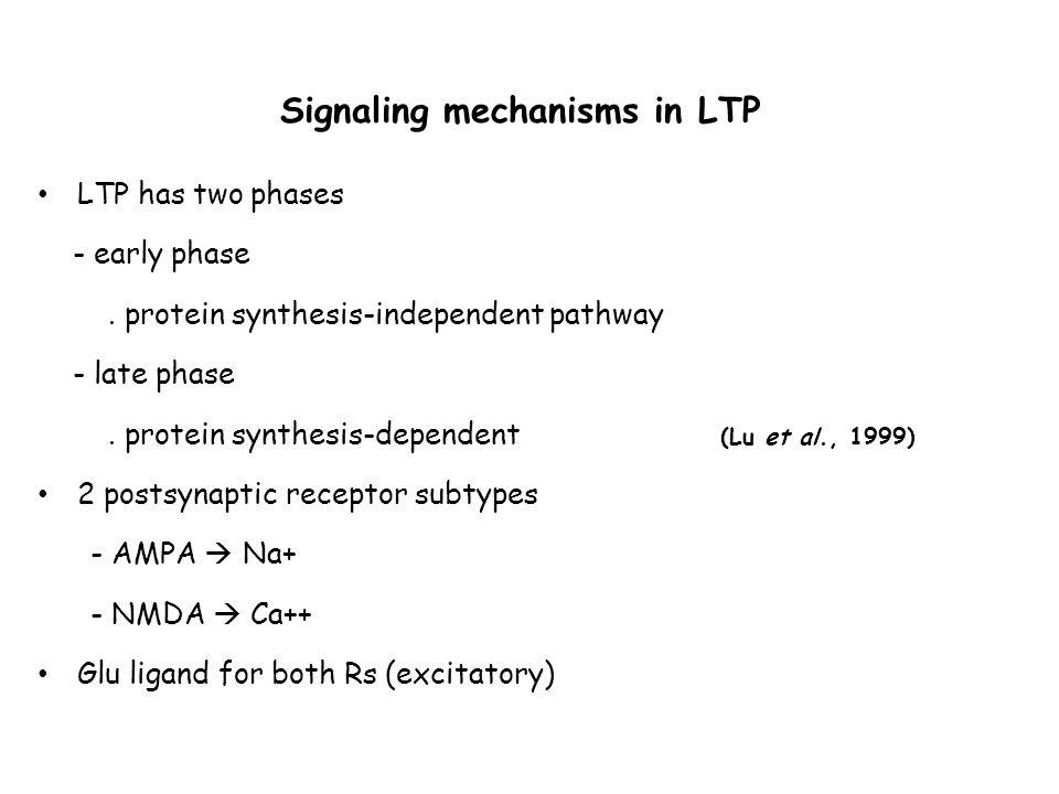 NMDA dependent LTP ( Kauer and Malenka, 2007 )