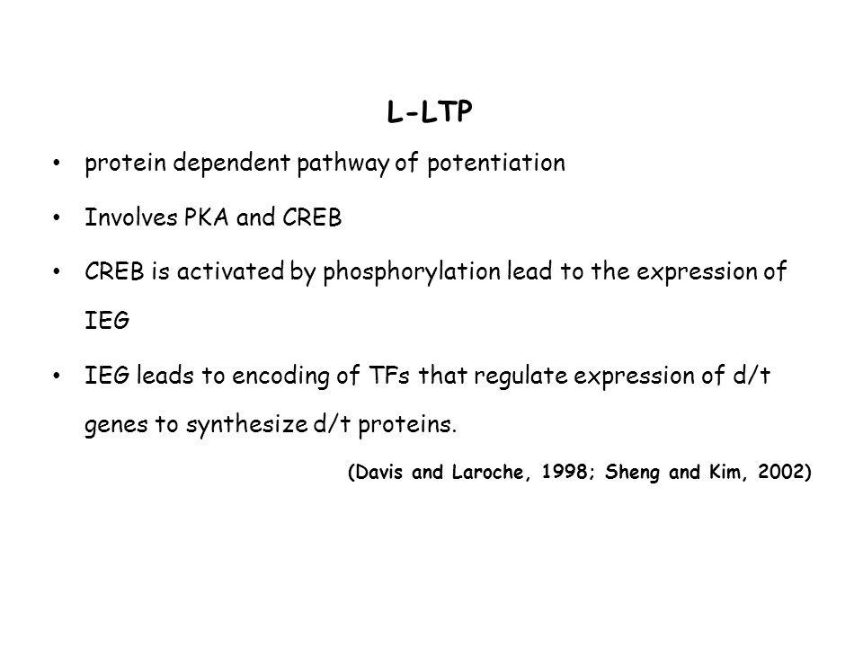 Serotonin ?.Inhibition of the system enhances performance (Barnes et al., 1990, 1992).