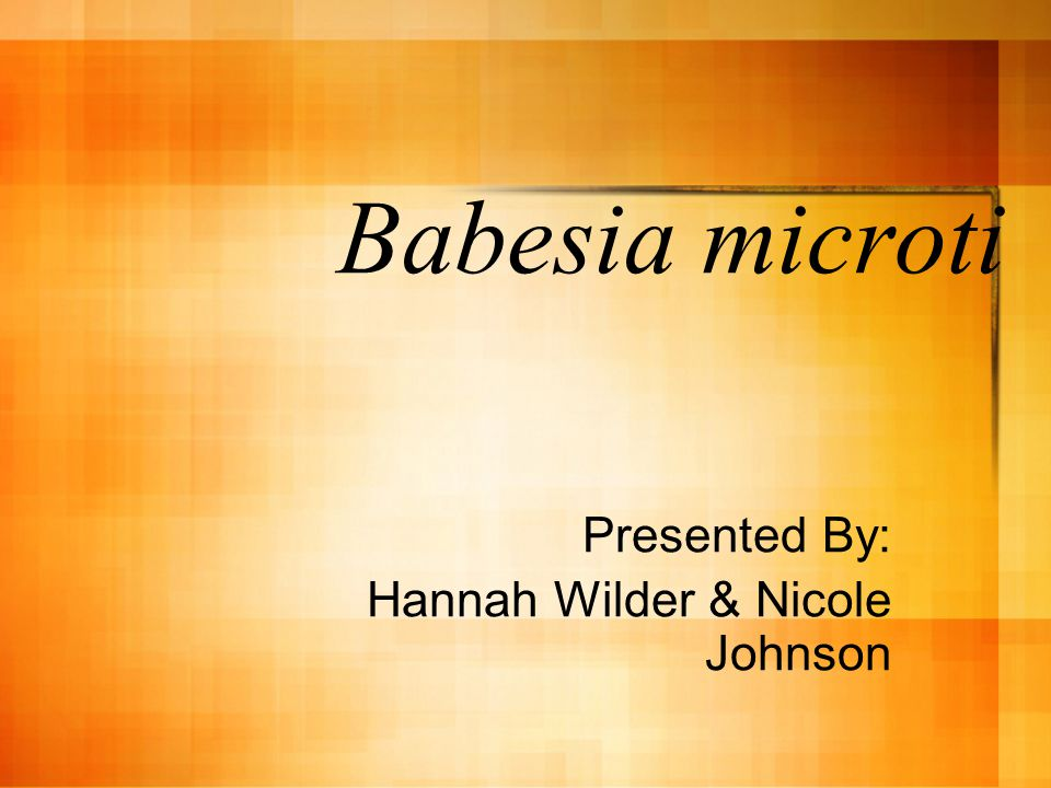 Babesia microti Presented By: Hannah Wilder & Nicole Johnson