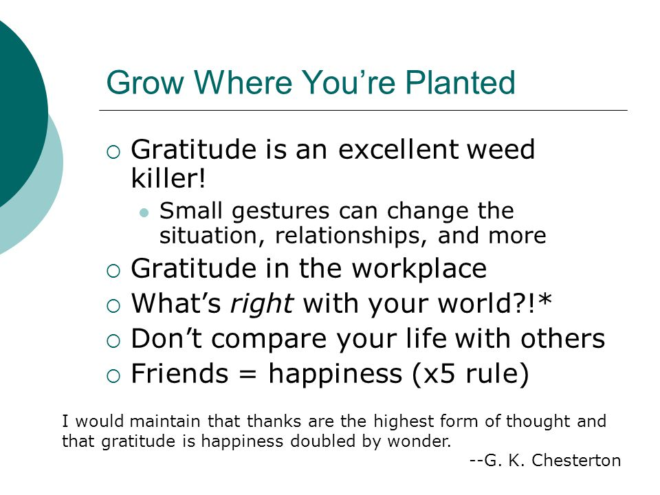 Grow Where You're Planted  Gratitude is an excellent weed killer.