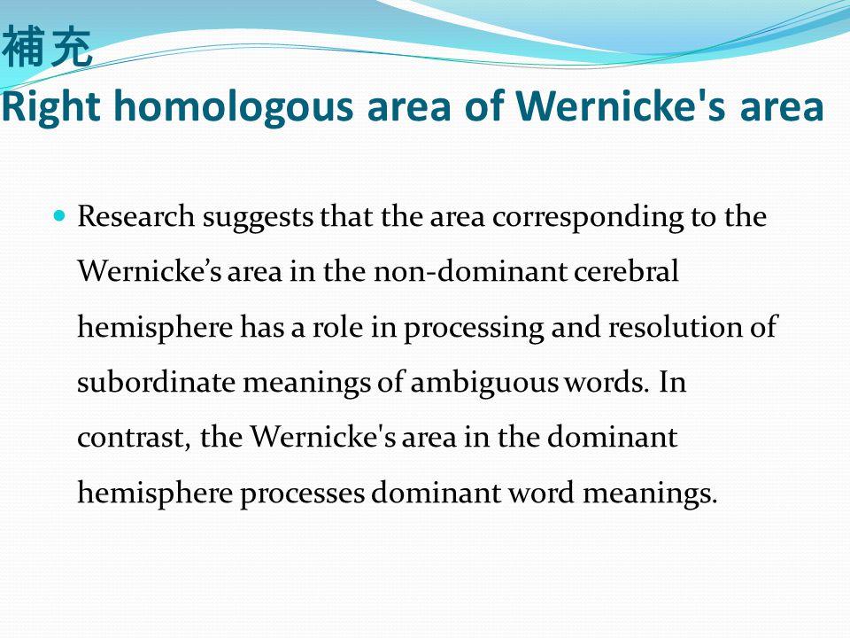 補充 Right homologous area of Wernicke s area Research suggests that the area corresponding to the Wernicke's area in the non-dominant cerebral hemisphere has a role in processing and resolution of subordinate meanings of ambiguous words.
