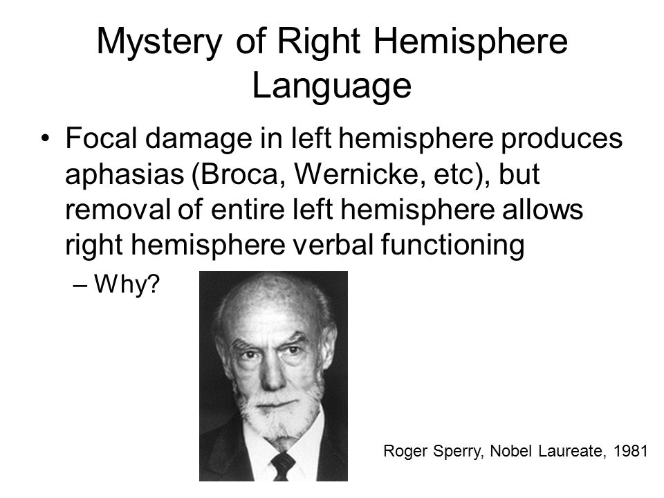 Mystery of Right Hemisphere Language Focal damage in left hemisphere produces aphasias (Broca, Wernicke, etc), but removal of entire left hemisphere allows right hemisphere verbal functioning –Why.