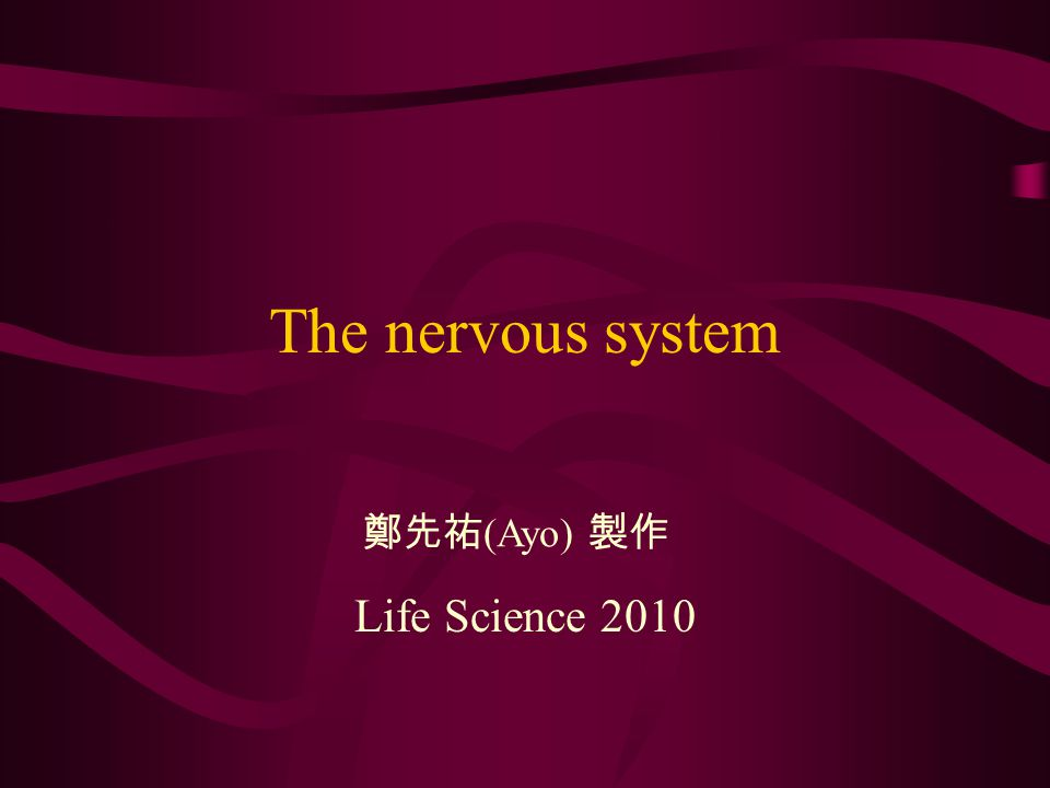 The nervous system Life Science 2010 鄭先祐 (Ayo) 製作