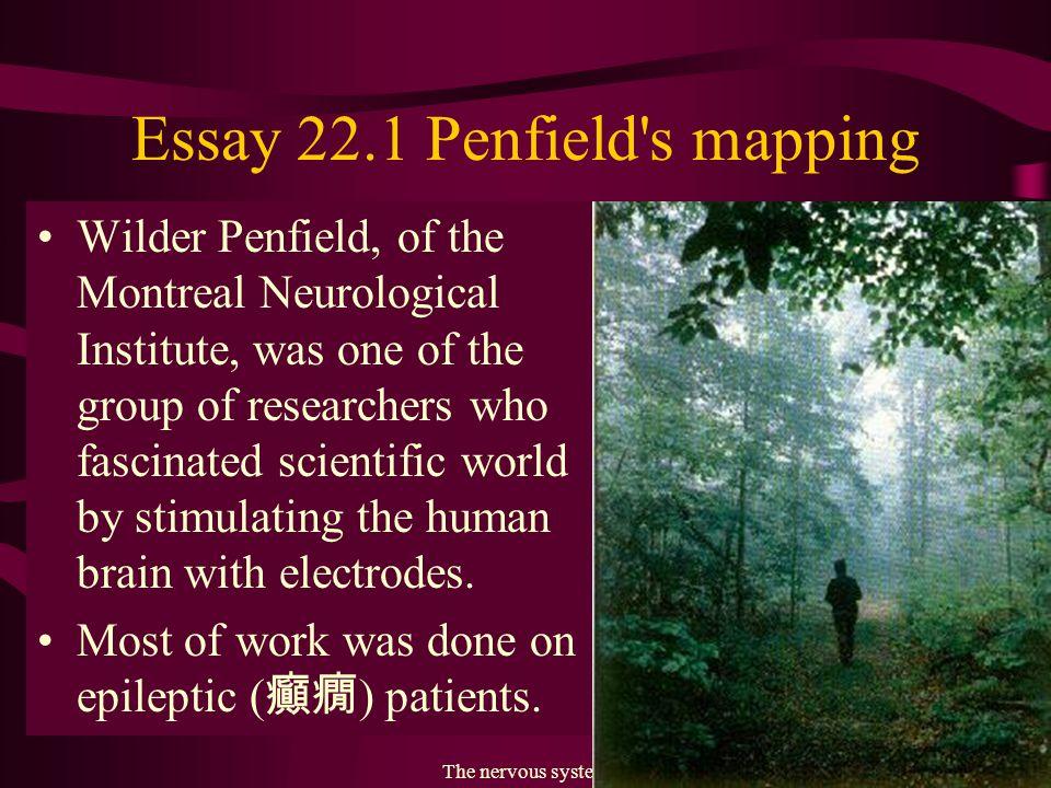 The nervous system13 Fig. 22.8 Sensory and motor cortex. 感應區動作區 思考區