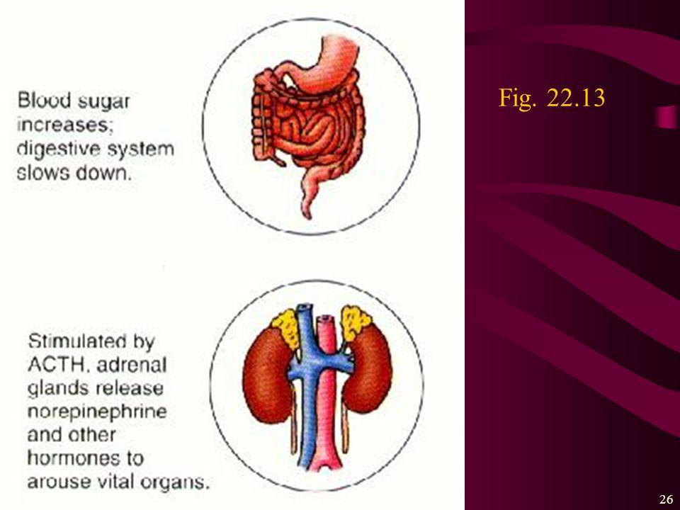 The nervous system25 Fig. 22.13