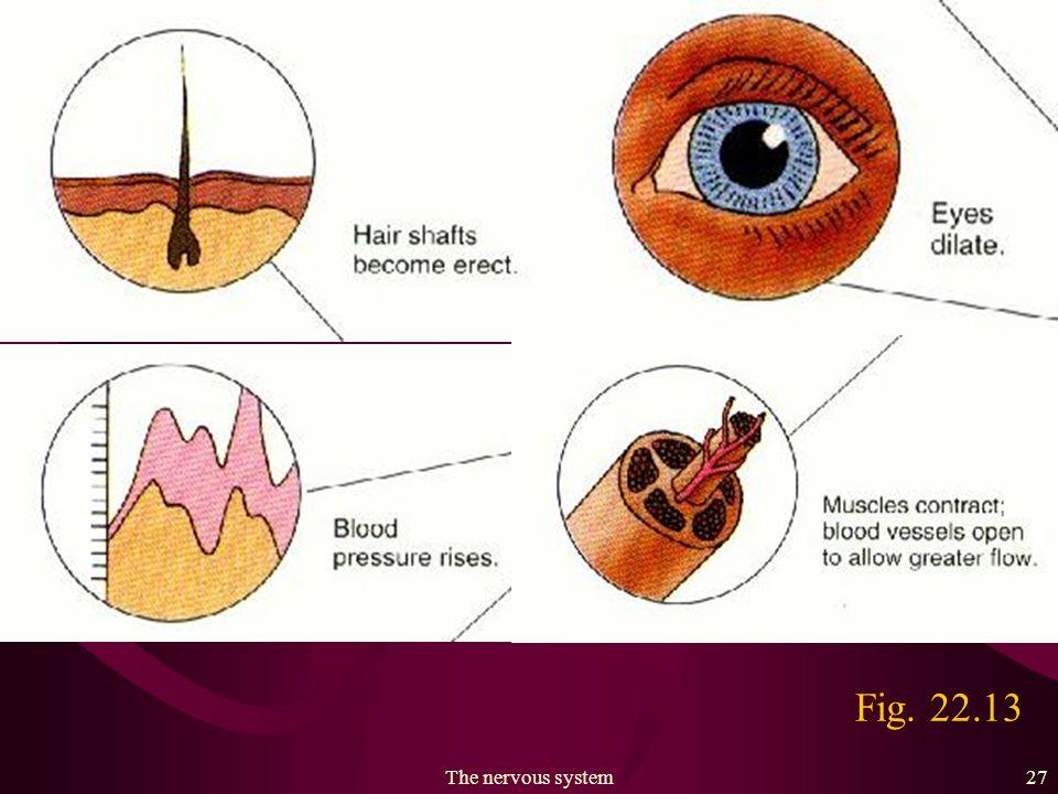 The nervous system26 Fig. 22.13
