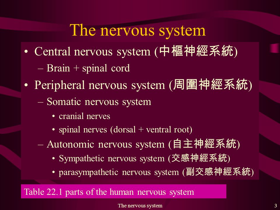 The nervous system23 Fig.
