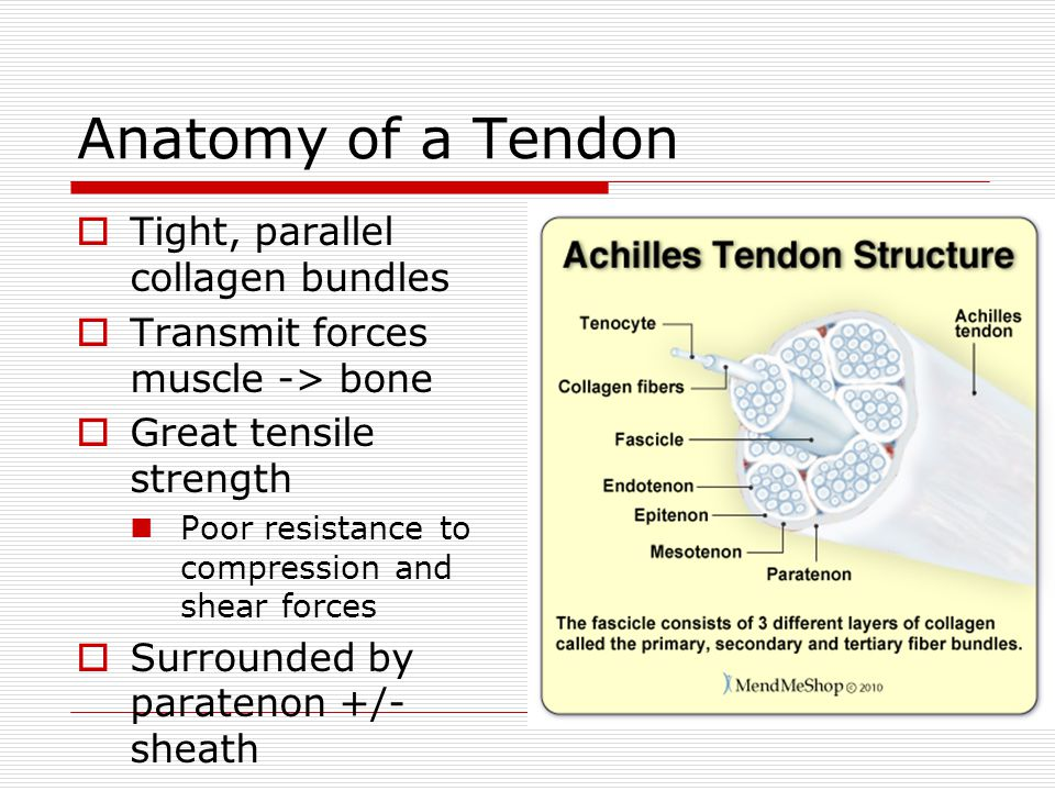 Prolotherapy  Sclerosing therapy  Reduces neovascularization but not tendon thickness Ohberg, Alfredson, Br J Sports Med, 2002.