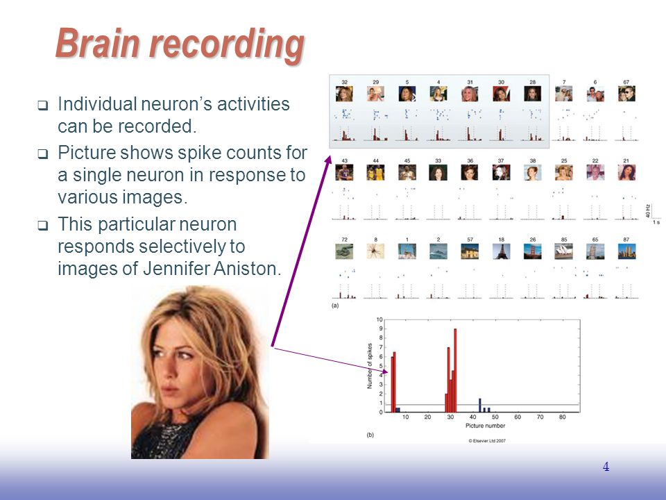 EE141 4 Brain recording  Individual neuron's activities can be recorded.  Picture shows spike counts for a single neuron in response to various imag