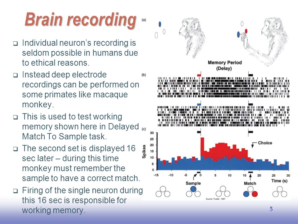 EE141 5 Brain recording  Individual neuron's recording is seldom possible in humans due to ethical reasons.  Instead deep electrode recordings can b