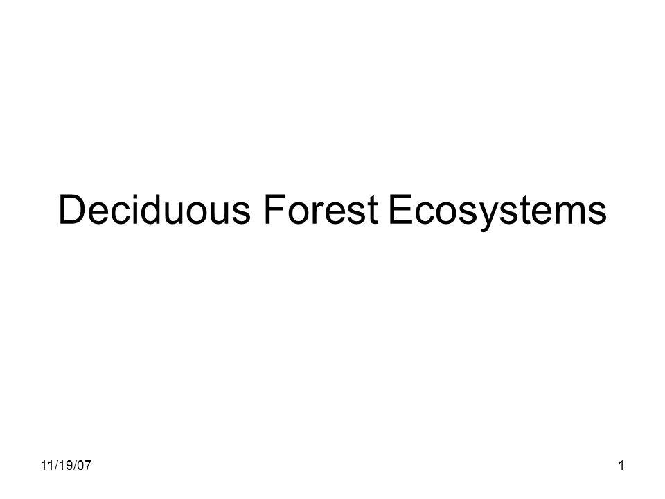 11/19/071 Deciduous Forest Ecosystems