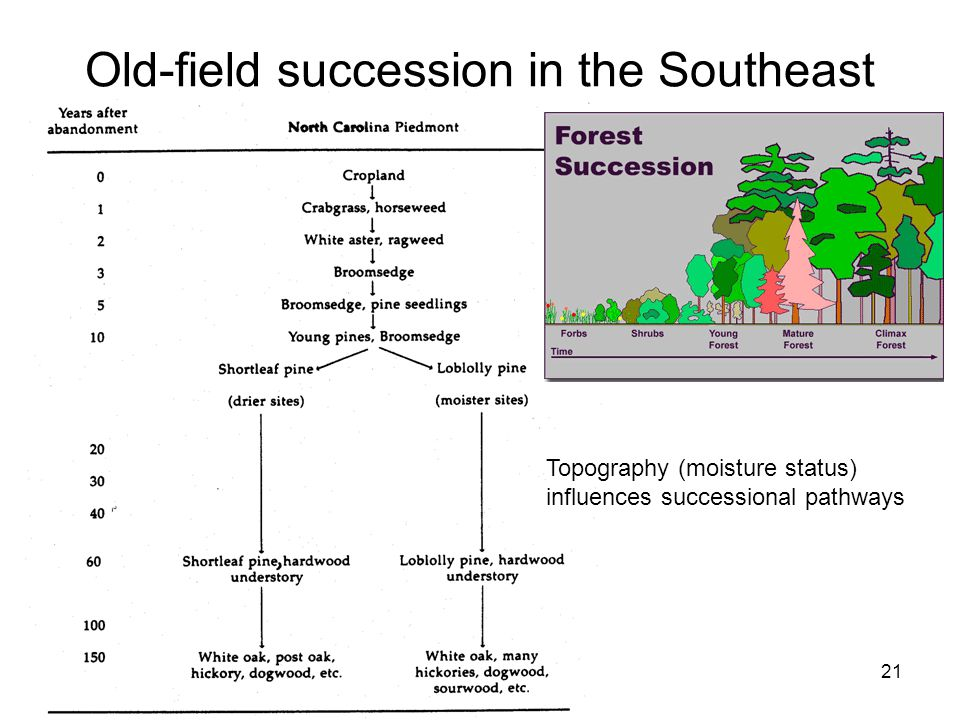 11/19/0721 Old-field succession in the Southeast Topography (moisture status) influences successional pathways