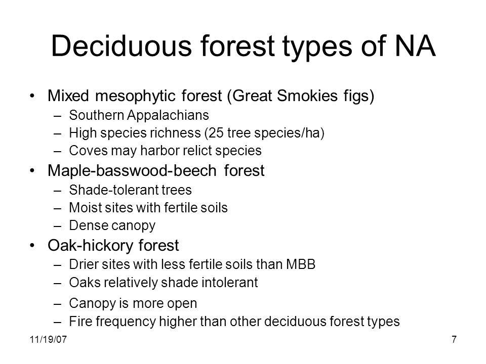 11/19/077 Deciduous forest types of NA Mixed mesophytic forest (Great Smokies figs) –Southern Appalachians –High species richness (25 tree species/ha) –Coves may harbor relict species Maple-basswood-beech forest –Shade-tolerant trees –Moist sites with fertile soils –Dense canopy Oak-hickory forest –Drier sites with less fertile soils than MBB –Oaks relatively shade intolerant –Canopy is more open –Fire frequency higher than other deciduous forest types
