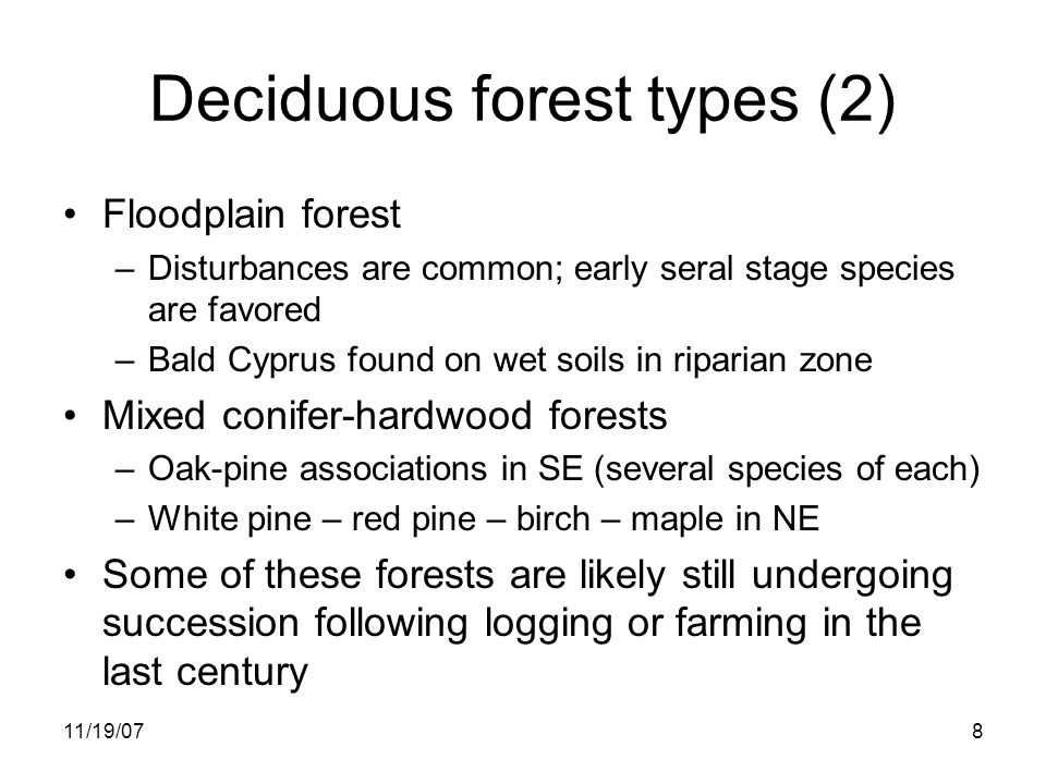 11/19/078 Deciduous forest types (2) Floodplain forest –Disturbances are common; early seral stage species are favored –Bald Cyprus found on wet soils in riparian zone Mixed conifer-hardwood forests –Oak-pine associations in SE (several species of each) –White pine – red pine – birch – maple in NE Some of these forests are likely still undergoing succession following logging or farming in the last century