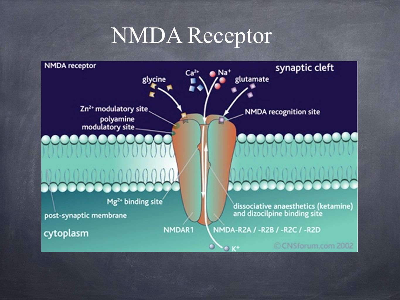 Analgesia effects: Preventing central sensitization in the dorsal horn neurons (interfere with pain transmission in spinal cord) Inhibits nitric oxide synthase S(+) enantiomer shown to have opioid mu receptor activity Analgesia occurs at lower blood levels than loss of consciousness (subanesthetic doses produce analgesia) Ketamine