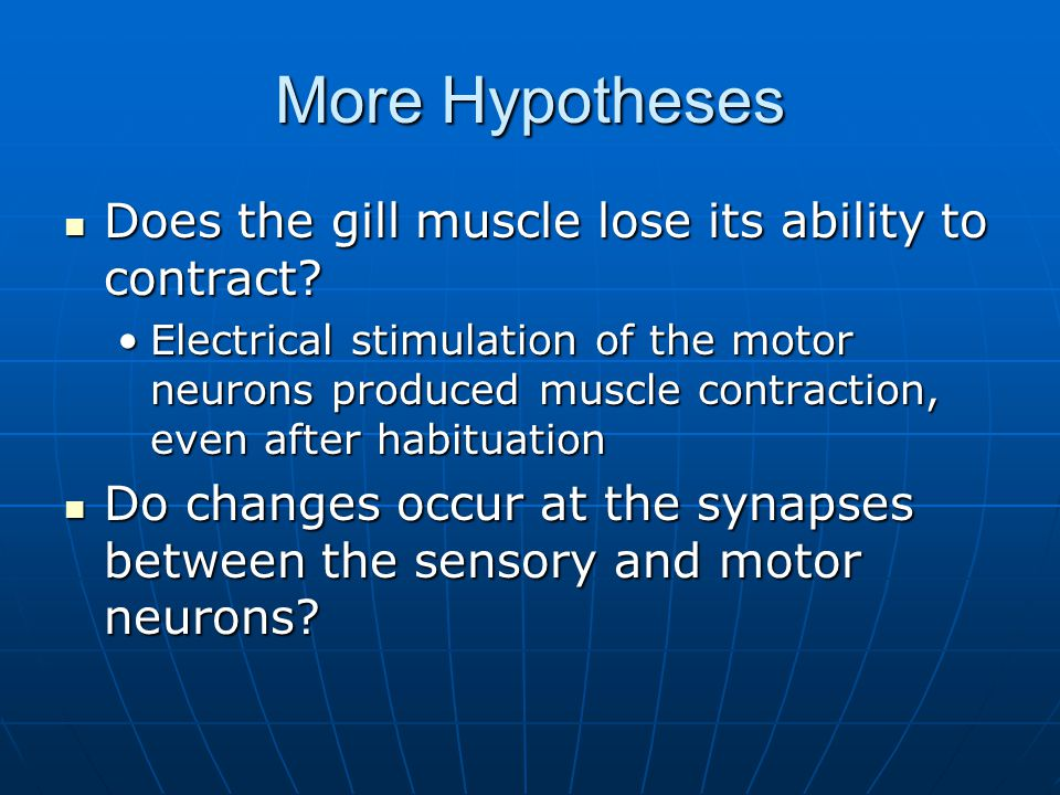 More Hypotheses Does the gill muscle lose its ability to contract.