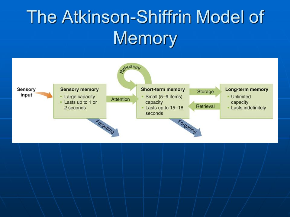 The Atkinson-Shiffrin Model of Memory