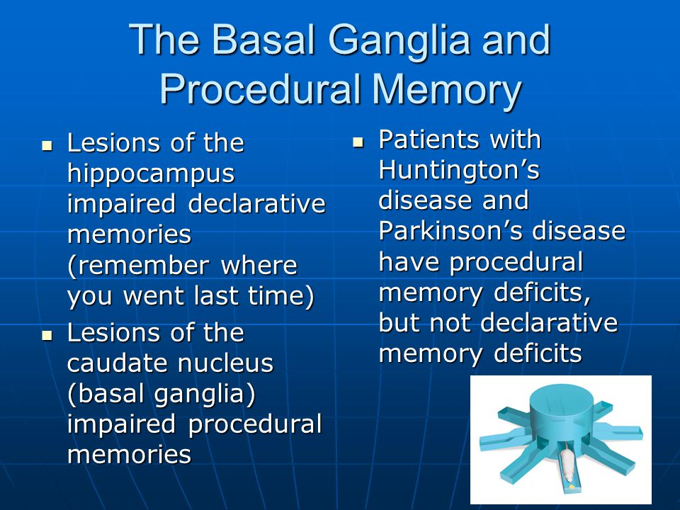 The Basal Ganglia and Procedural Memory Lesions of the hippocampus impaired declarative memories (remember where you went last time) Lesions of the hippocampus impaired declarative memories (remember where you went last time) Lesions of the caudate nucleus (basal ganglia) impaired procedural memories Lesions of the caudate nucleus (basal ganglia) impaired procedural memories Patients with Huntington's disease and Parkinson's disease have procedural memory deficits, but not declarative memory deficits Patients with Huntington's disease and Parkinson's disease have procedural memory deficits, but not declarative memory deficits