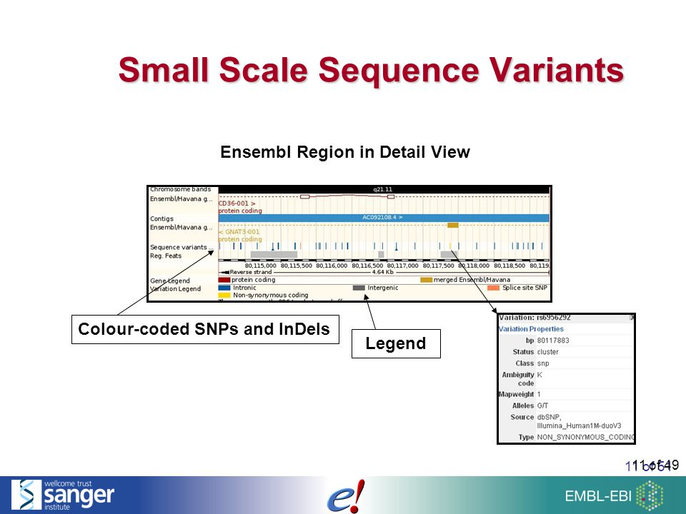 11 of 51 11 of 49 Small Scale Sequence Variants Ensembl Region in Detail View Colour-coded SNPs and InDels Legend