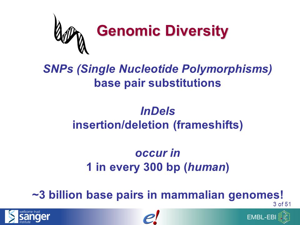 3 of 51 Genomic Diversity SNPs (Single Nucleotide Polymorphisms) base pair substitutions InDels insertion/deletion (frameshifts) occur in 1 in every 300 bp (human) ~3 billion base pairs in mammalian genomes!