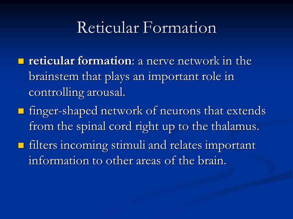 Reticular Formation reticular formation: a nerve network in the brainstem that plays an important role in controlling arousal.