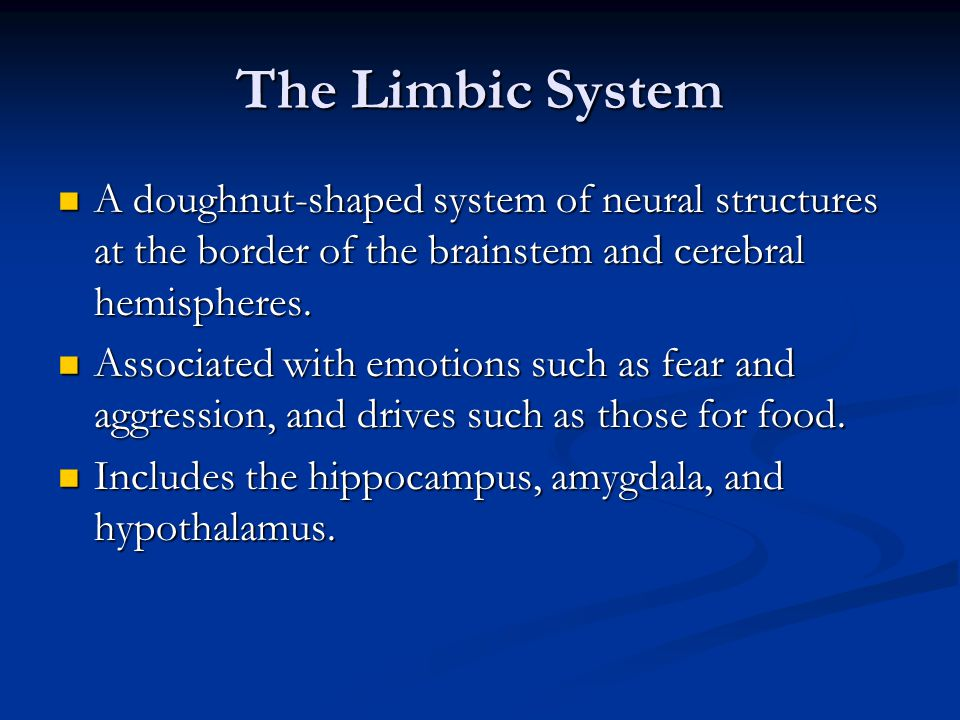 The Limbic System A doughnut-shaped system of neural structures at the border of the brainstem and cerebral hemispheres.