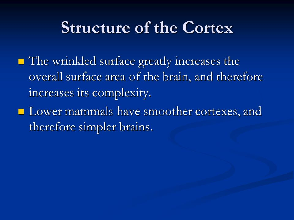 Structure of the Cortex The wrinkled surface greatly increases the overall surface area of the brain, and therefore increases its complexity.
