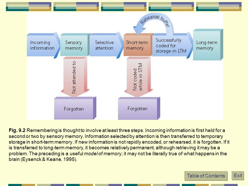 Fig. 9.2 Remembering is thought to involve at least three steps. Incoming information is first held for a second or two by sensory memory. Information