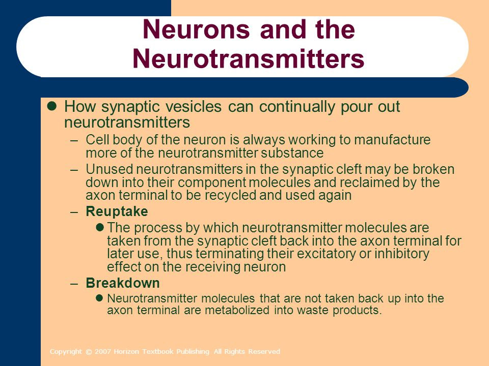Copyright © 2007 Horizon Textbook Publishing All Rights Reserved Neurons and the Neurotransmitters How synaptic vesicles can continually pour out neurotransmitters –Cell body of the neuron is always working to manufacture more of the neurotransmitter substance –Unused neurotransmitters in the synaptic cleft may be broken down into their component molecules and reclaimed by the axon terminal to be recycled and used again –Reuptake The process by which neurotransmitter molecules are taken from the synaptic cleft back into the axon terminal for later use, thus terminating their excitatory or inhibitory effect on the receiving neuron –Breakdown Neurotransmitter molecules that are not taken back up into the axon terminal are metabolized into waste products.