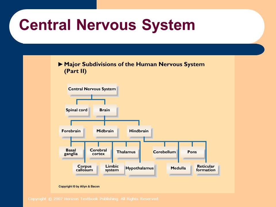 Copyright © 2007 Horizon Textbook Publishing All Rights Reserved Central Nervous System