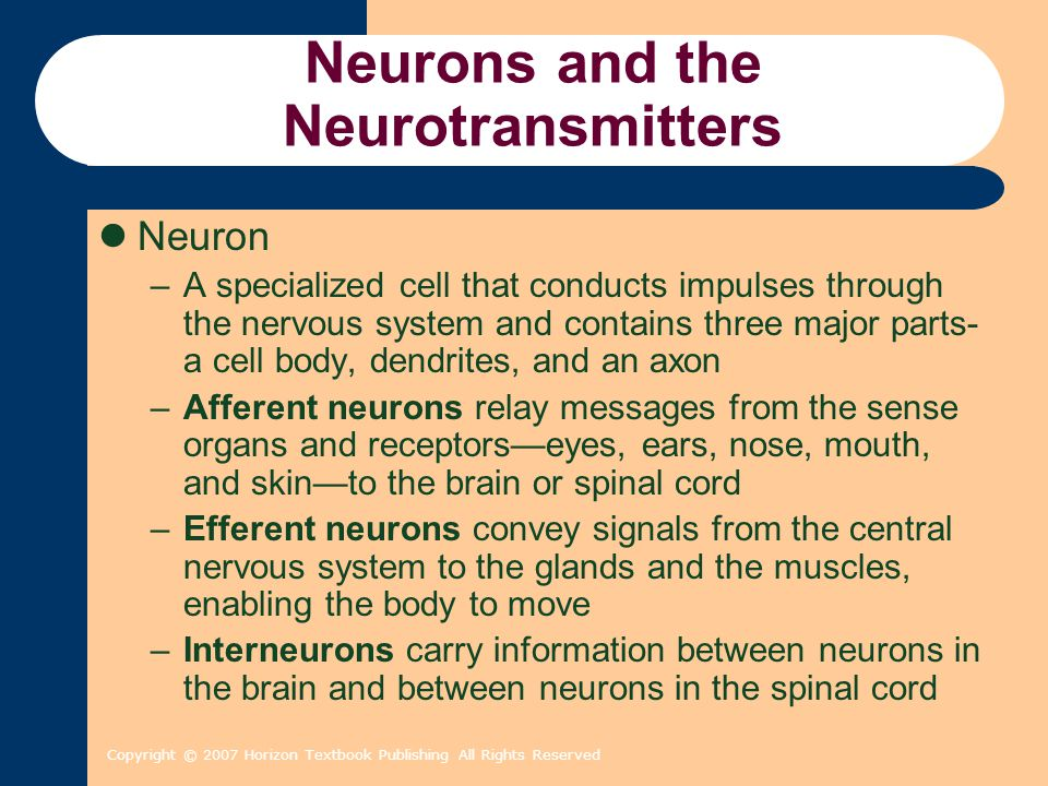 Copyright © 2007 Horizon Textbook Publishing All Rights Reserved Neurons and the Neurotransmitters Anatomy of a Neuron –Cell body The part of the neuron that contains the nucleus and carries out the neuron's metabolic functions –Dendrites The branchlike extensions of a neuron that receive signals from other neurons –Axon The slender, tail-like extension of the neuron that transmits signals to the dendrites or cell body of the other neurons or to muscles or glands –Synapse The junction where the axon of a sending neuron communicates with a receiving neuron across the synaptic cleft