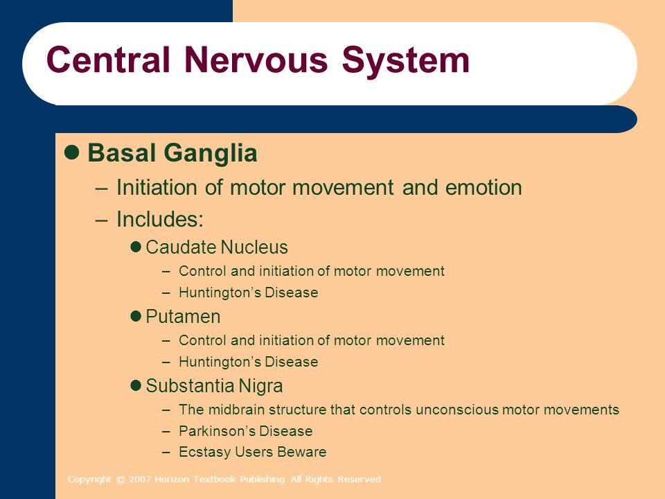 Copyright © 2007 Horizon Textbook Publishing All Rights Reserved Central Nervous System Basal Ganglia –Initiation of motor movement and emotion –Inclu