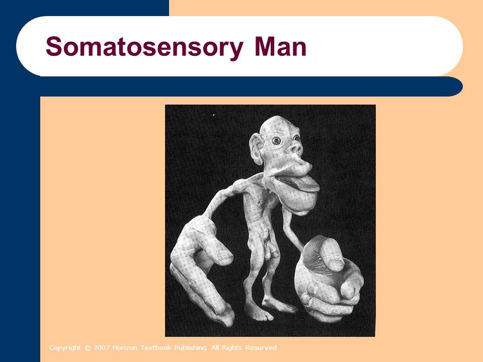 Copyright © 2007 Horizon Textbook Publishing All Rights Reserved Somatosensory Man