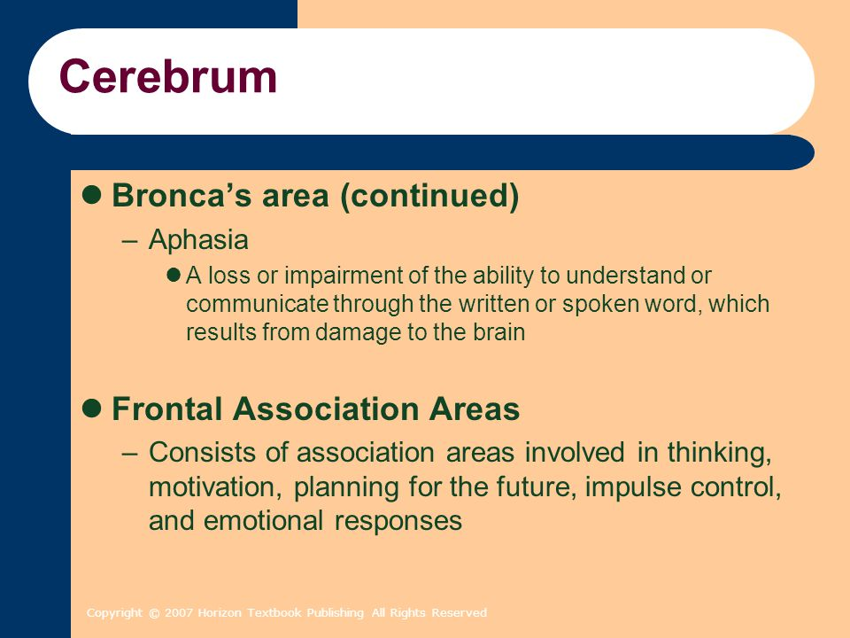 Copyright © 2007 Horizon Textbook Publishing All Rights Reserved Cerebrum Bronca's area (continued) –Aphasia A loss or impairment of the ability to un