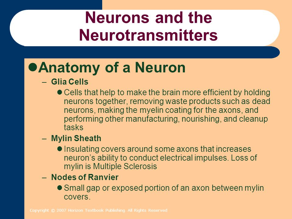 Copyright © 2007 Horizon Textbook Publishing All Rights Reserved Neurons and the Neurotransmitters