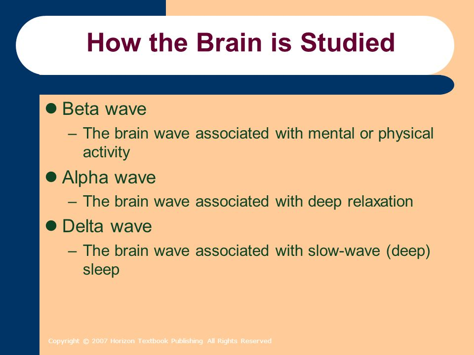 Copyright © 2007 Horizon Textbook Publishing All Rights Reserved How the Brain is Studied Beta wave –The brain wave associated with mental or physical activity Alpha wave –The brain wave associated with deep relaxation Delta wave –The brain wave associated with slow-wave (deep) sleep