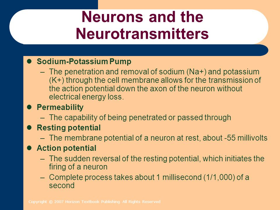 Copyright © 2007 Horizon Textbook Publishing All Rights Reserved Neurons and the Neurotransmitters Na + Na + & K + Cl - & K +