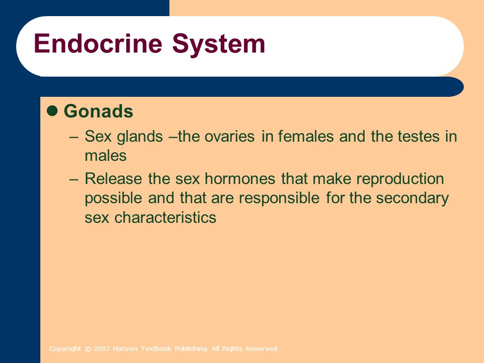 Copyright © 2007 Horizon Textbook Publishing All Rights Reserved Endocrine System Gonads –Sex glands –the ovaries in females and the testes in males –